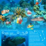 10 Great Spots For Snorkeling And Scuba Diving In Florida | Visit - Florida Dive Sites Map
