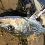 An Introduction To Fishing The California Aqueduct   California Aqueduct Fishing Map