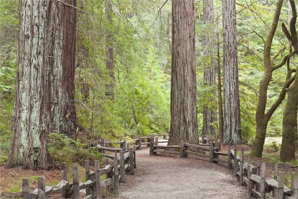 California Giant Redwoods Map California Redwood Forests Where To - Giant Redwood Trees California Map