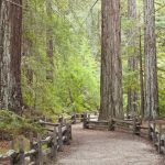 California Redwood Forests: Where To See The Big Trees - Giant Redwoods California Map