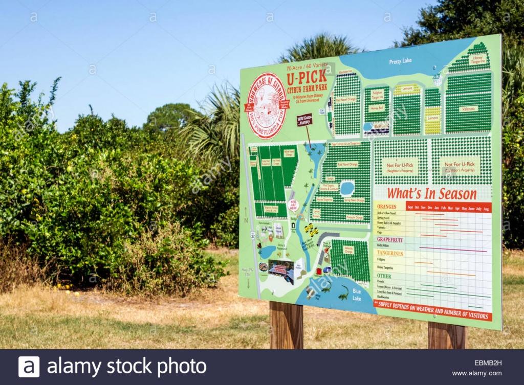 Clermont Florida Showcase Of Citrus Orange Grove Tangerine Lemon - Florida Orange Groves Map