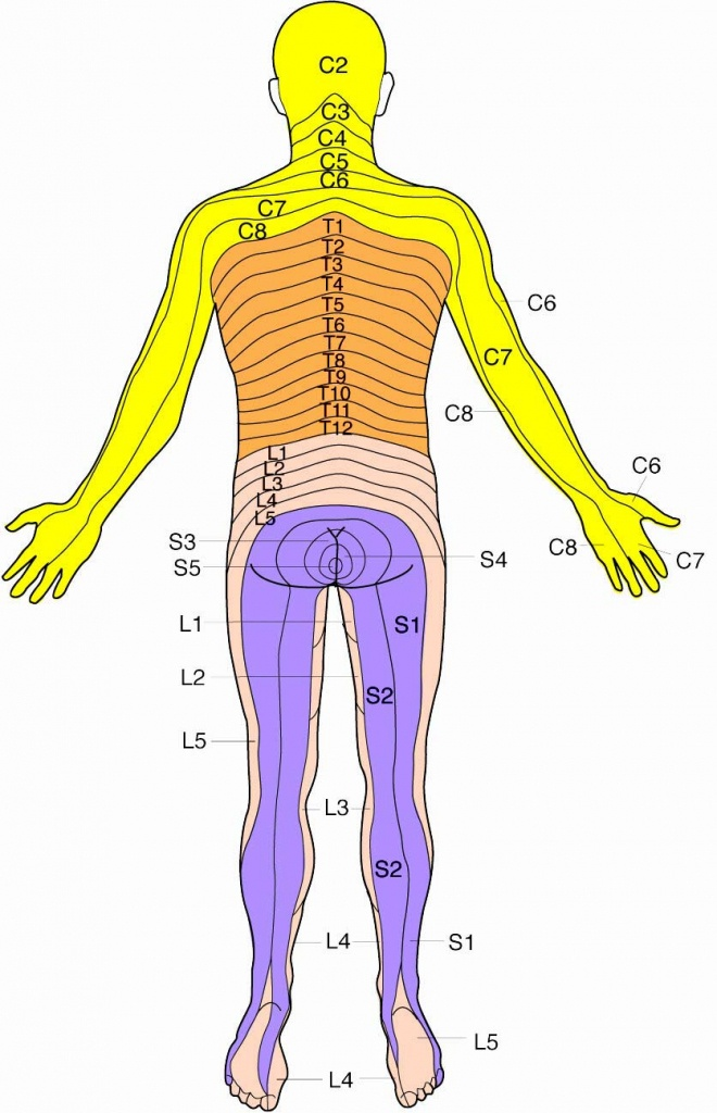 Dermatomes Map (89+ Images In Collection) Page 3 - Printable Dermatome Map