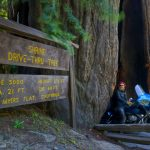 Drive Through A Redwood - Giant Redwoods California Map
