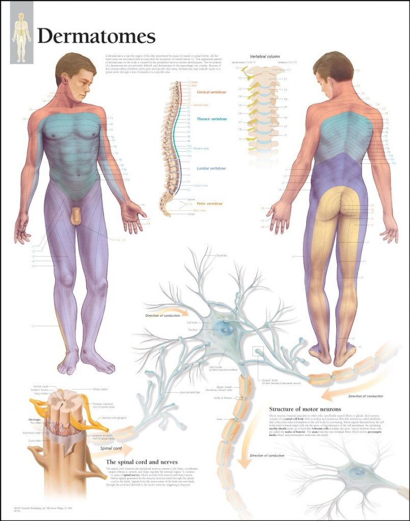 √ Pin Dermatome Chart Printable Welcome On Pinterest - Printable Dermatome Map