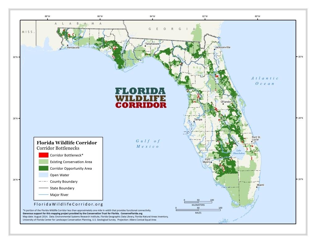 Florida Wildlife - Panthers & Black Bears   Sierra Club - Bears In Florida Map
