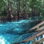 Ginnie Springs In High Springs, Florida | Road Trippin   Natural Springs Florida Map
