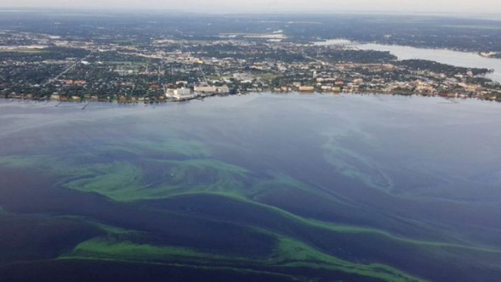 Florida Blue Green Algae Map