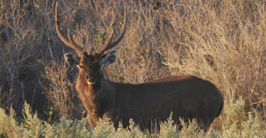 Lottery-Like Public Program Offers Expanded Texas Hunting - Texas Parks And Wildlife Public Hunting Lands Map Booklet