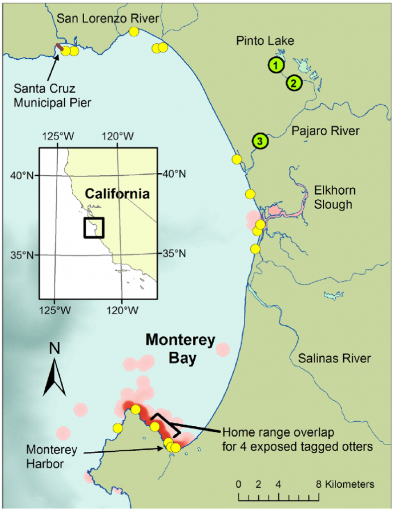 Map Of Monterey Bay Showing Distribution Of Sea Otters Dying Due To - Monterey Bay California Map