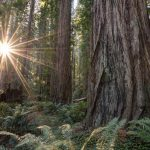 Places To See Big Trees | Visit California – Giant Redwoods California Map