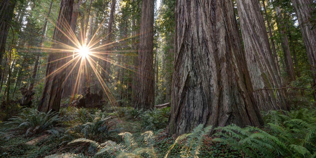 Places To See Big Trees | Visit California - Giant Redwoods California Map