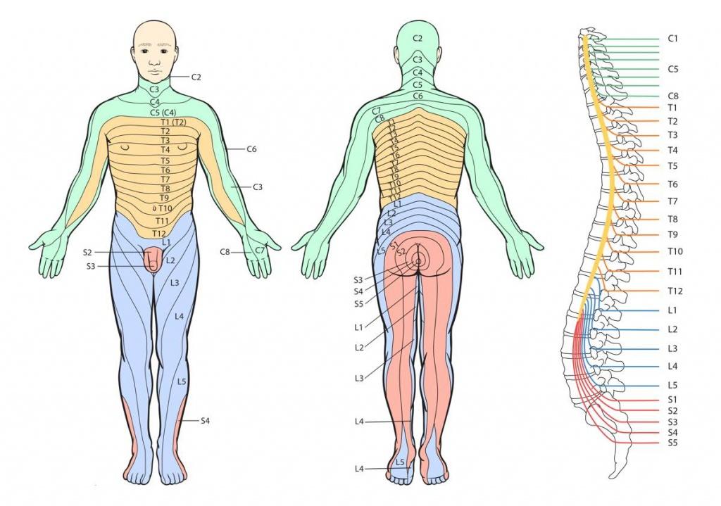 Printable Dermatome Chart - Total Life Care Compounding - Printable Body Maps