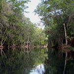 Silver River (Florida)   Wikipedia   Silver River Florida Map