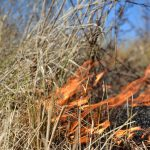 Texas Wildfires Map – Wildfires In Texas – Wildland Fire - Texas Forestry Fire Map