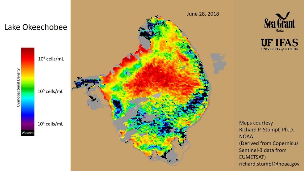 The Algae Bloom Is Back. But Why? - Florida Sea Grant - Toxic Algae In Florida Map