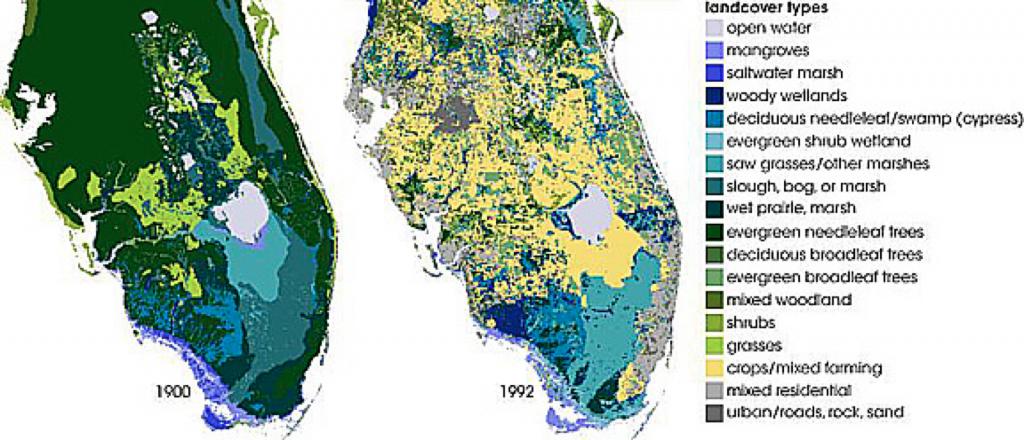 Wetlands In Florida – Fiorella Ruiz – Medium - Florida Wetlands Map